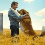 A Dog's Purpose Quiz – How Well Do You Know The Movie?