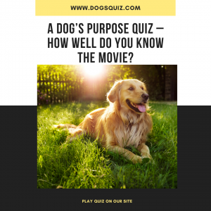 A Dog's Purpose Quiz