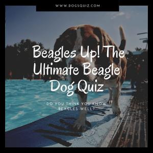 beagles quiz