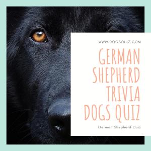 German Shepherd Quiz
