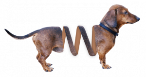 dachshund quiz