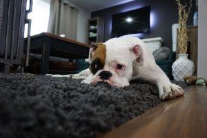 is my dog depressed quiz