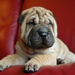 Can You Guess These Shar-Pei Mix Breeds Quiz | 20 Q