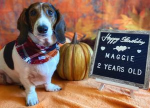 basset hound facts and information