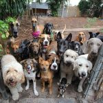Can You Pass This Dog Breed Identification Quiz | 50 Q [PHOTOS]