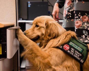 do i need a service dog test